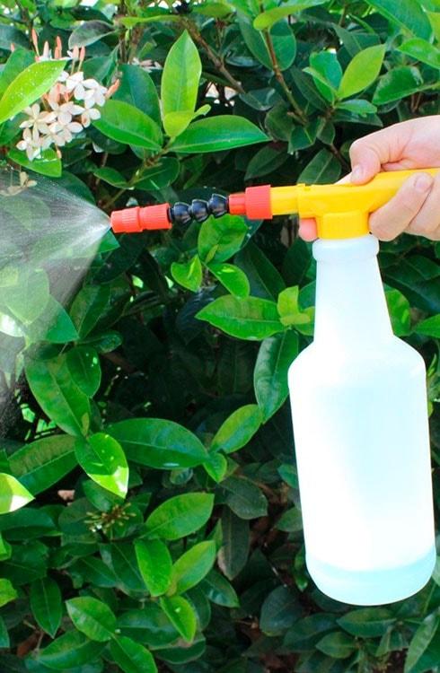 Control de Plagas para plantas