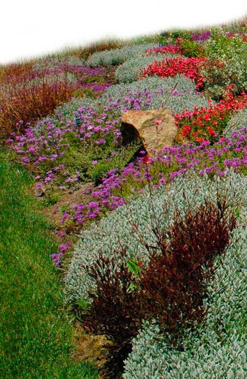 Mantenci n de jardines a empresas y particulares argeo for Mantencion de jardines